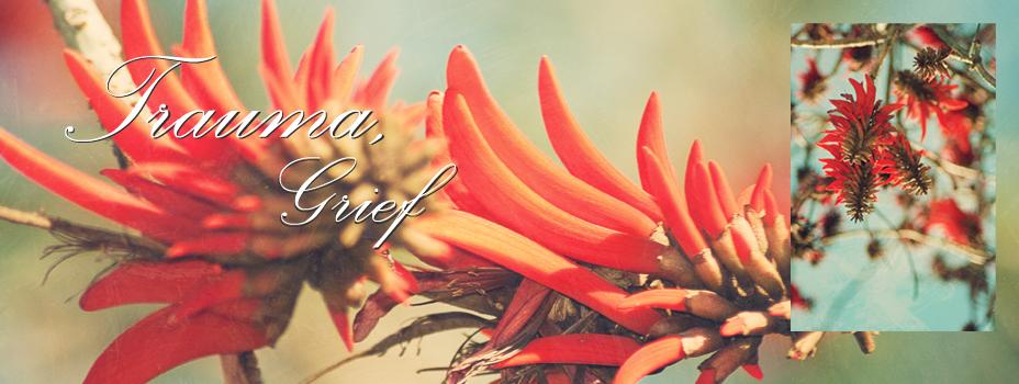 084 369 9113 :: lara@registeredcounsellor.co.za